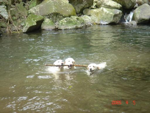 教狗狗學游泳