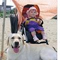 馴鹿車嬰兒座椅