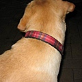 特徵一-蘇格蘭紋紅項圈