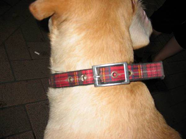特徵二-蘇格蘭紋紅項圈
