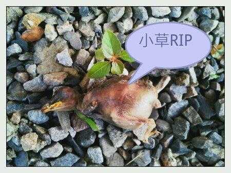 時尚風華精品民宿-主人日記