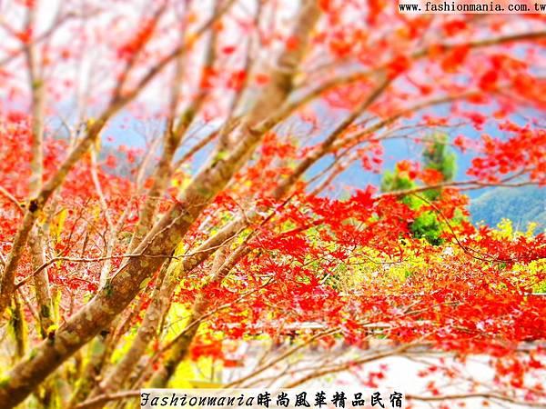 時尚風華精品民宿-太平山之旅印記 (32)