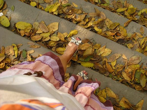 脚踩落叶,心中无限怀想
