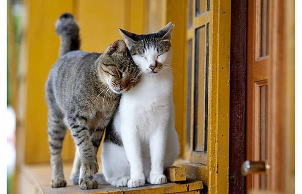他們的生活 貓夫人攝影個展