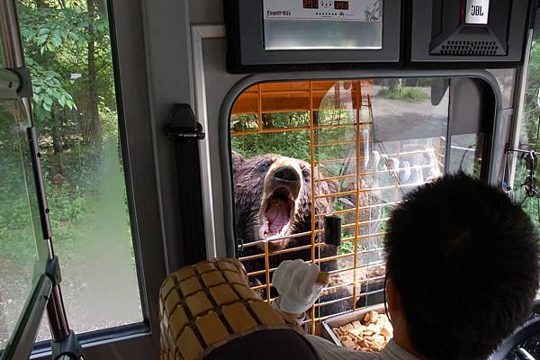 愛寶樂園 - 野生動物區︰棕熊要餅乾吃