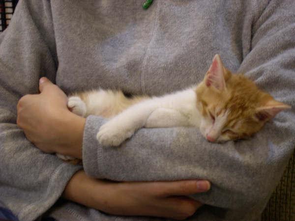 師大蘇格拉底其中一隻小貓