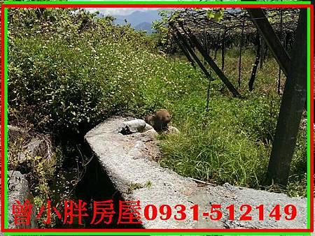 PhotoCap_23216.jpg
