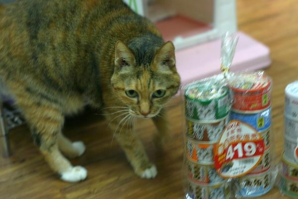 2011年AIXIA罐頭組X貓