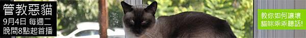 動物星球頻道-管教惡貓