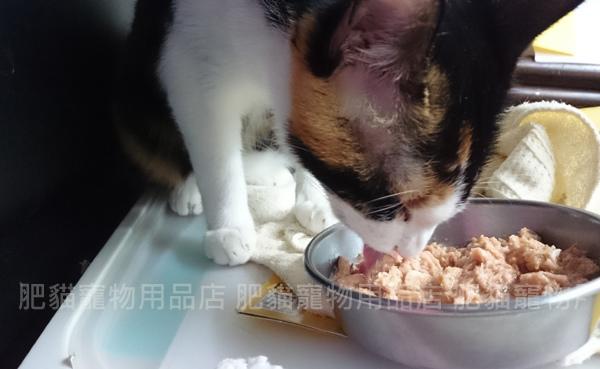 貓鮮-DSC_7115.jpg