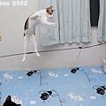 2008_11230046.jpg