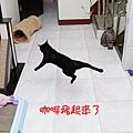 2008_11230089.jpg