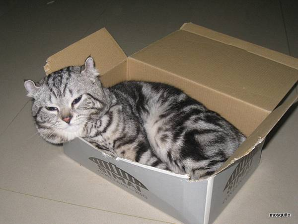 箱子狂10