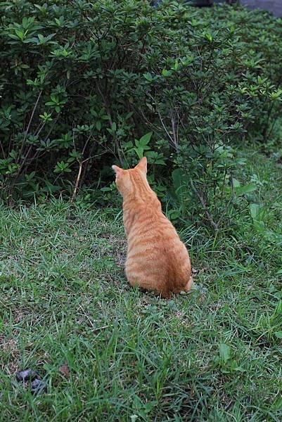 小胖貓的屁股