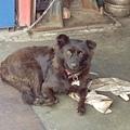 【動物溝通實習筆記】小米(狗狗,母):前世和你一起打仗,是好友