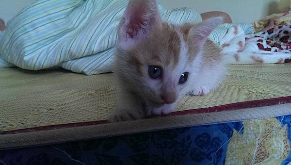 【夏霏動物溝通】貓咪 可可:離世寵物溝通0.jpg
