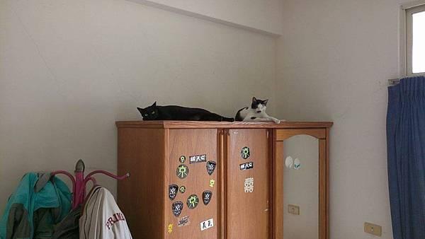 【夏霏動物溝通】貓咪 安安2.jpg
