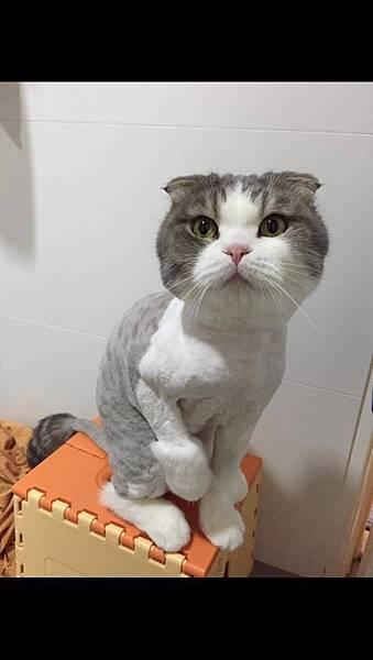 20160606夏霏動物溝通 貓咪海寶2.jpg