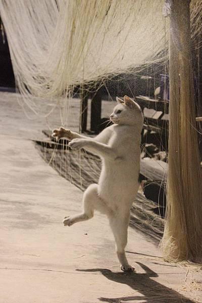 貓展005