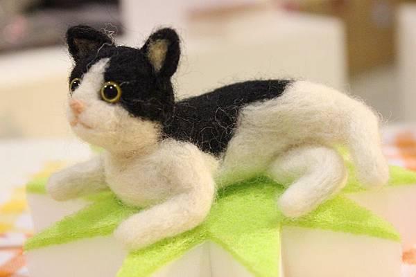 貓展019
