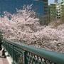 櫻之宮站的橋