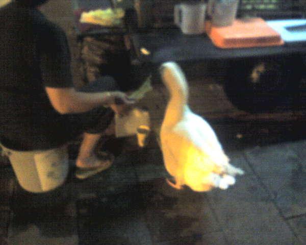鵝先生是甘蔗攤代言人
