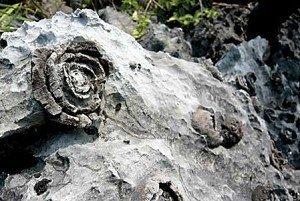 廣西發現神奇的石頭開花1.jpg