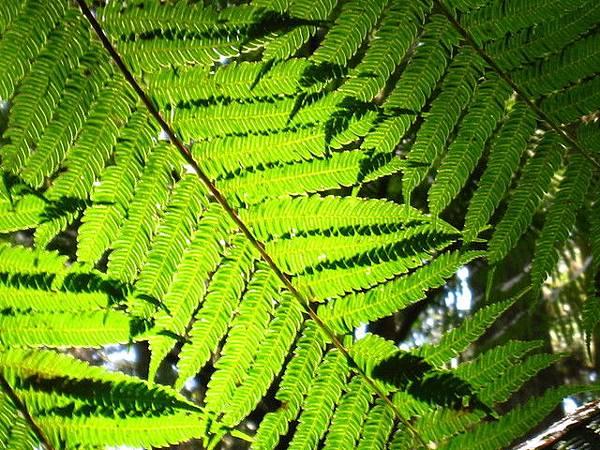 處處驚喜,厥類植物,美不勝收