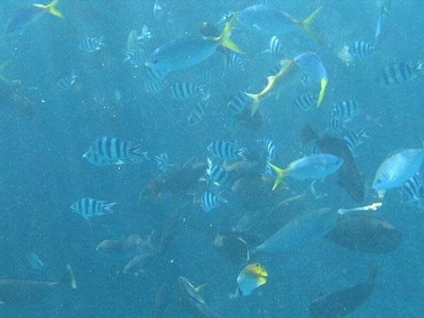 到處都是魚的國度(二)