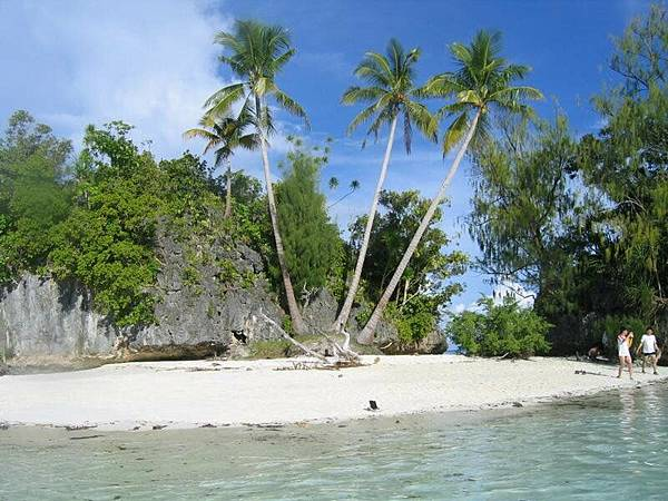 很特別的三棵椰子樹