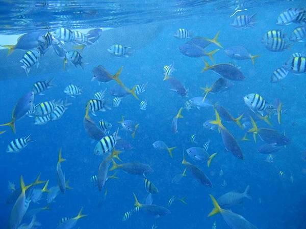 再看看熱帶魚吧