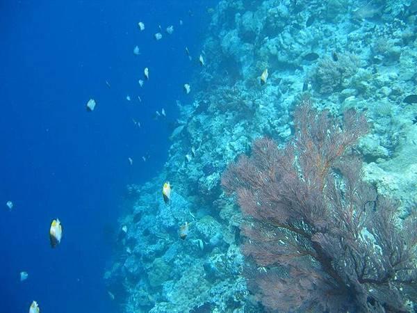 這張才是在海裡拍的
