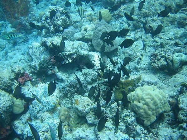 帛琉的魚種豐富,多到其實也認不出幾種魚啦