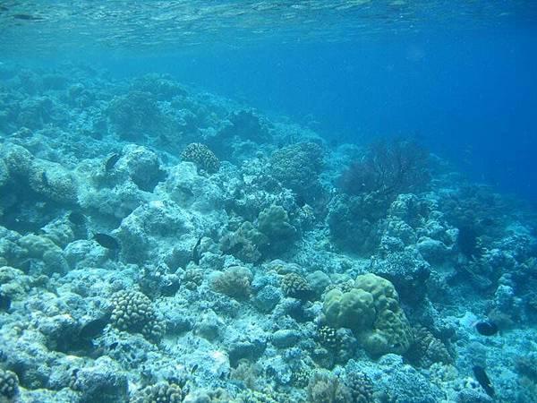 看到了幾種珊瑚呢?
