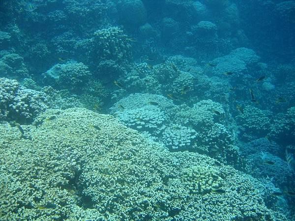 帛琉的水域能見度可達五十至一百公尺哦
