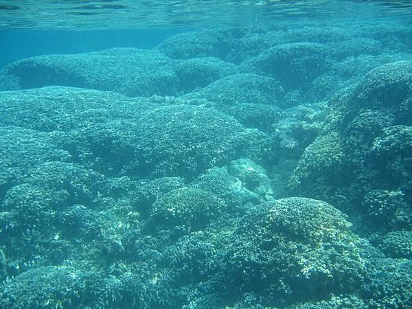 已經死掉的珊瑚