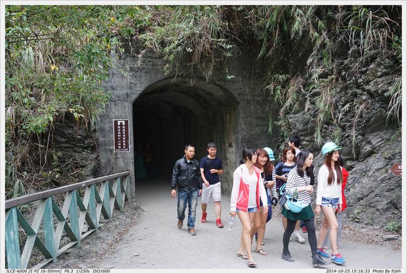 白楊步道-隧道