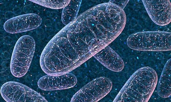 2-mitochondria.jpg