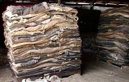Wet_Salted_Raw_Cow_Hides___Dry_Salted_Goat___Sheep_Skins