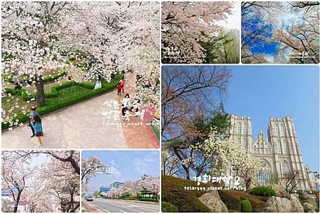 page 櫻花