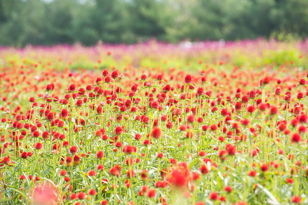 08-양주공원