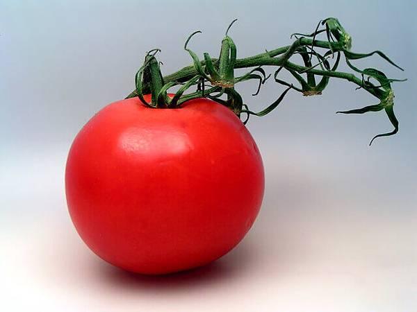 tomato-1465901-640x480.jpg