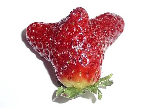 strawberry-1476761-640x480.jpg