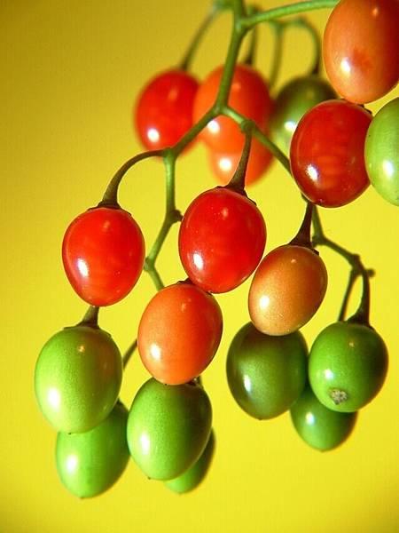 berries-1505895-639x852.jpg
