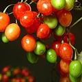 berries-1505897-639x852.jpg