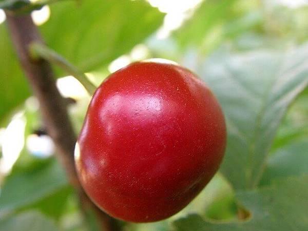 red-red-cherry-1546355-638x477.jpg