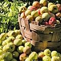 apples-1325736-640x480.jpg