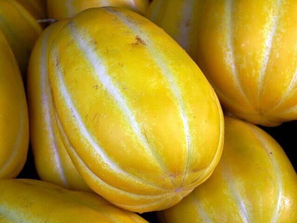 fruits-1325061-638x477.jpg