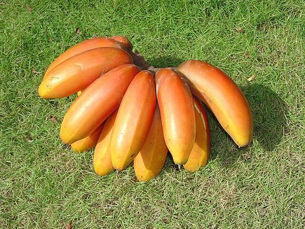 banana-1329207-640x480.jpg