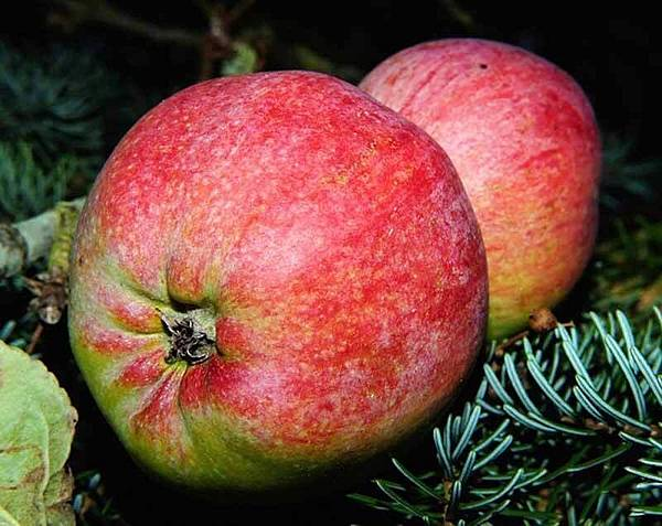 apple-482560_640.jpg